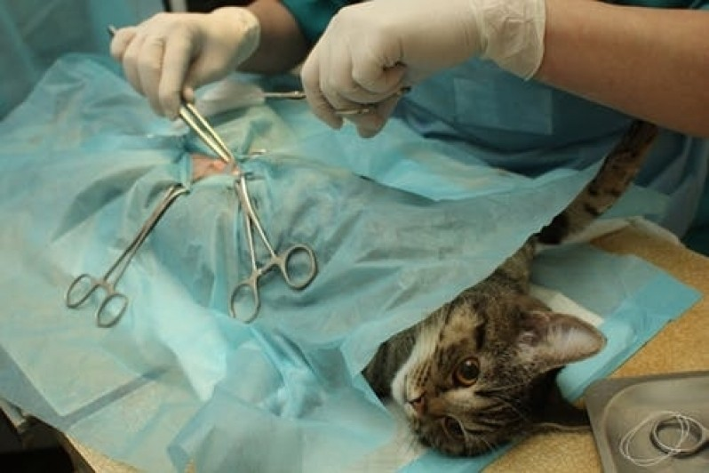 cirurgia-em-animais-de-companhia-kenkovet